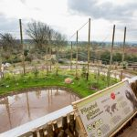 Gibbon's at Twycross Zoo celebrate first year in new home