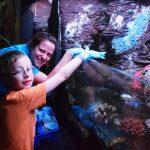 Autistic boy's aquarium wish comes true at National Sea Life Centre.