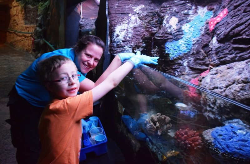 Autistic boy's aquarium wish comes true at National Sea Life Centre.