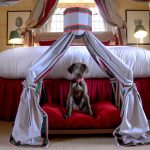 STAPLEFORD PARK INTRODUCES A TASTE OF LUXURY FOR CANINES