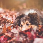 Autumnal Pet Care Tips from Top Pet Nutritionist
