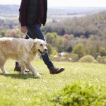 Banish those blues and go somewhere new this year with your pooch