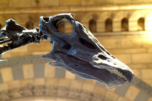 Dinosaur Dining At Birmingham Museum & Art Gallery