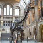 Dippy the Dinosaur is Coming to Birmingham's Museum & Art Gallery and Here's how to get your Free Tickets