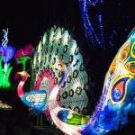 Birmingham Botanical Gardens Shining Bright this November