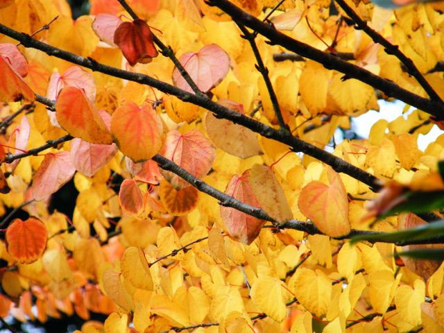 LIVING: Fall into Autumn