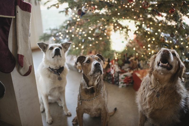 Christmas Gift Guide for Pampered Pets