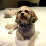 Fur-friendly stays at Hotel du Vin