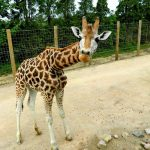 Twycross Zoo invites visitors to make a stand for conservation this May Half Term!