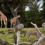 What are the Best Zoos to Visit in the UK?