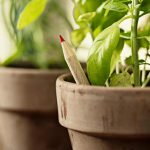 The Plantable Pencil That Grows Into Food