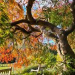 IMMERSE YOURSELF IN AUTUMN COLOURS AT THE BOTANICAL GARDENS