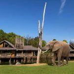 GO ON SAFARI WITH A STAYCATION IN THE WEST MIDLANDS