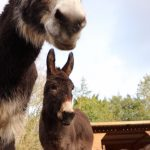 VIRTUAL DAY OUT WITH THE BIRMINGHAM DONKEYS ON EASTER SUNDAY