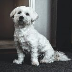 Tips on How to Help Your Dog Re-Adjust Post Lockdown
